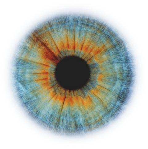 RANKIN-Eyescape